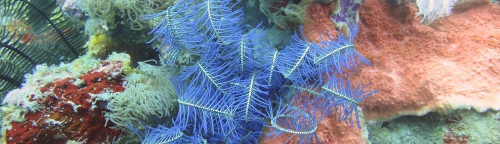 Entête coraux